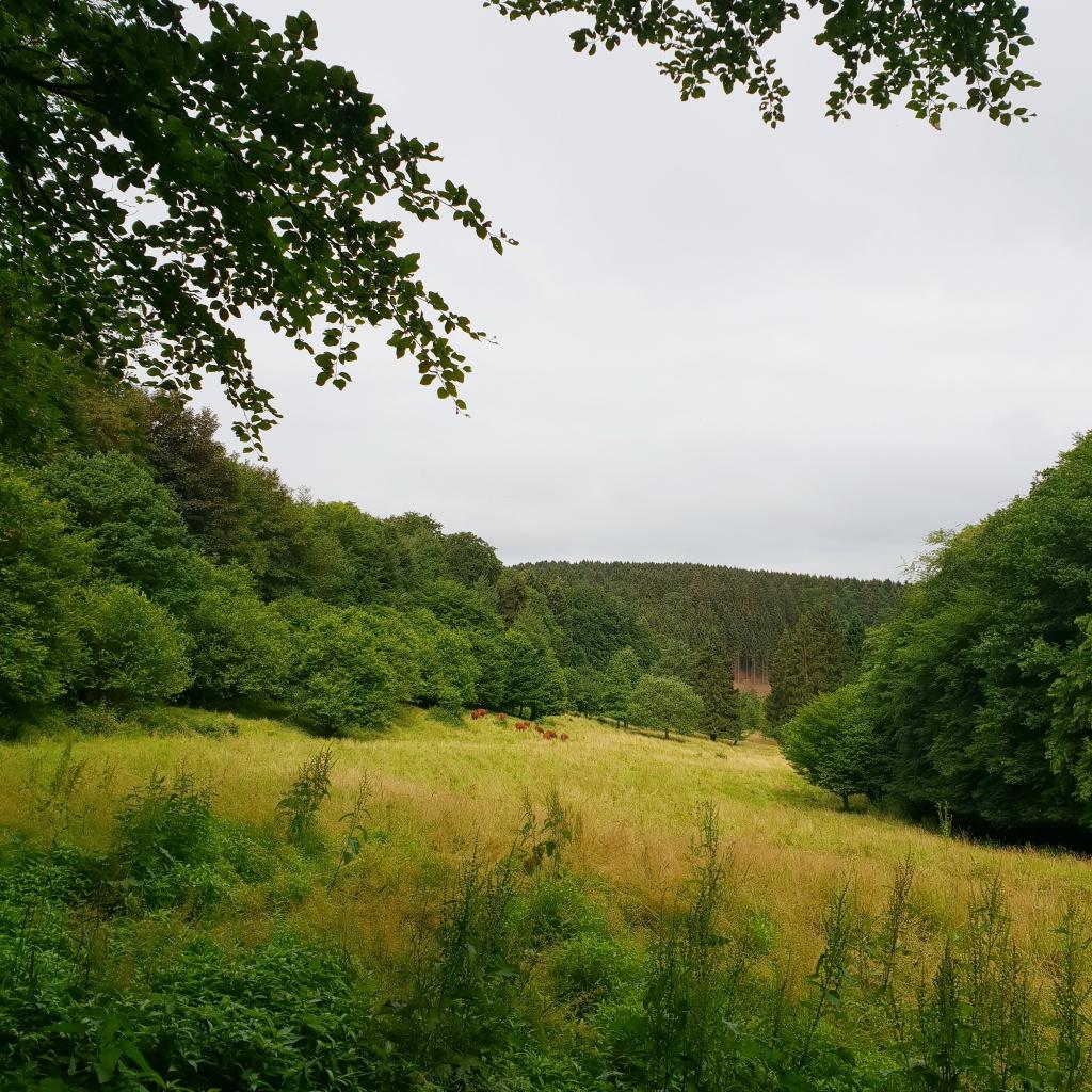 Wandermulti